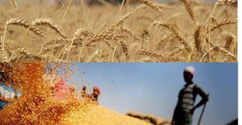Россия «двинула» пшеницу вЕгипте изаняла 80% рынка