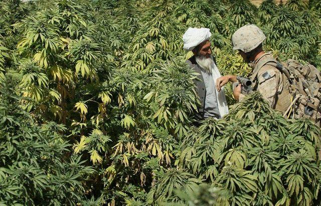 Как влияет конопля на сахар как выращивать марихуана