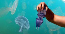 Под Анапой началось нашествие медуз