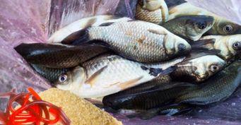 Эко-приманка: Червяки-самоделки для ловли на спиннинг
