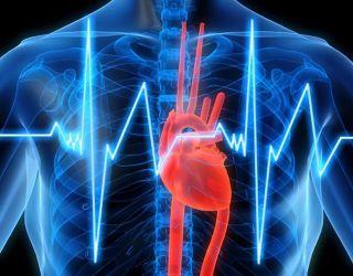 Ученые создали биологический кардиостимулятор