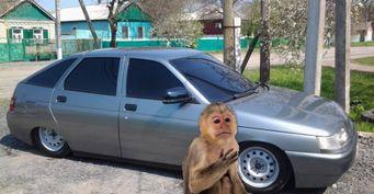 Старая LADA вместо макаки: Автолюбитель изМахачкалы меняет обезьяну намашину за100 тысяч рублей