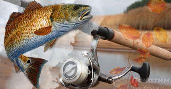 Трофейный судак: на что ловить осенью и какой спиннинг выбрать