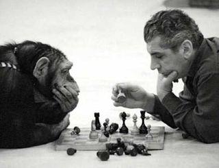Ученые: Интеллект шимпанзе передается по наследству