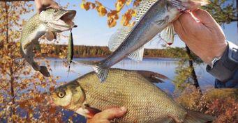 Рыболовный календарь наоктябрь 2020: Лучшие дни, чтобы поймать судака, леща ищуку донастоящих холодов