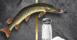 Рыбацкий трофей: как сделать чучело из щучьей головы своими руками