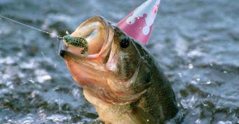 Чешуя подскажет, или как определить возраст рыбы
