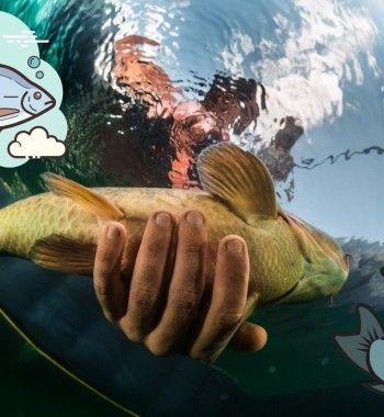 Рыбалка на сазана, леща и сома в августе: Прогноз клёва 2020 года