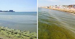 Пляжи Анапы больше не напоминают болото