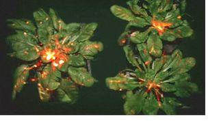 Растения реагируют на опасность – ученые