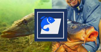 «Белая» рыба осенью: Методы ловли намалых реках поменялись, ирыба начинает голодать