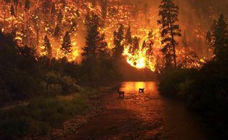 В Красноярском крае введен режим ЧС в связи с лесными пожарами