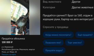 Скриншоты объявления: портал Avito