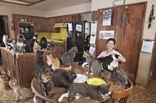 В Санкт-Петербурге подросток не смог жить с 60 кошками и убил себя