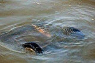 В Москву-реку упал автомобиль – погиб 1 человек