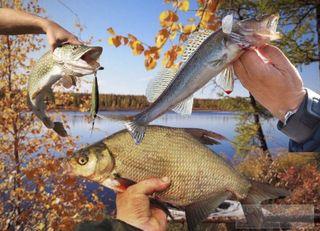 Холодная вода— непомеха хорошему улову, если рыбачить в«правильные» дни. Источник изображения: Елена Лановая