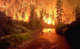 Из-за лесных пожаров в Туве введён режим ЧС