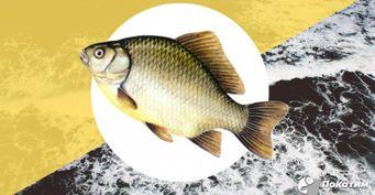 Последний шанс поймать леща: Тактика осенней ловли опытного рыбака
