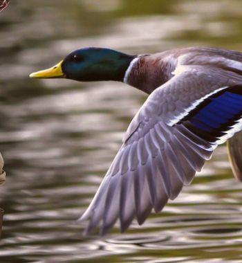 Охота наутку 2020: Полевые хитрости помогут новичку илюбителю осенью