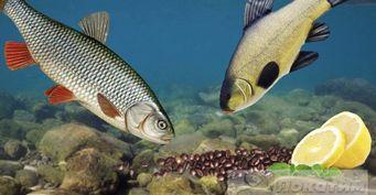 Кофе и «лимонка»: активатор клева для рыбы, одобренный учеными