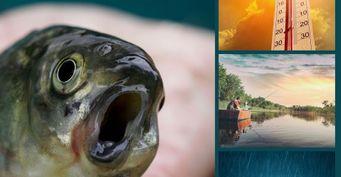 Секреты погодных условий: заметка для рыбака на каждый июль