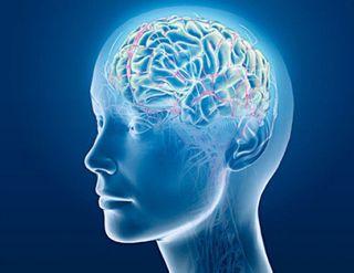 Ученые доказали, что человек использует лишь 10% мозга