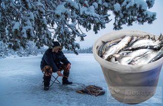 Зимняя рыбалка сщедрым уловом. Коллаж: автор «Покатим.ру» Анастасия Васильева