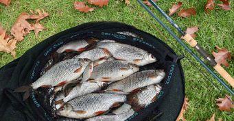 Количество имеет значение: Как поймать много плотвы осенью