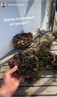 Завидный улов // Фото: instagram merzlikinandrey