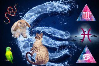 Фото: Животные изнаки Воды, Источник: pokatim.ru Мария Заря
