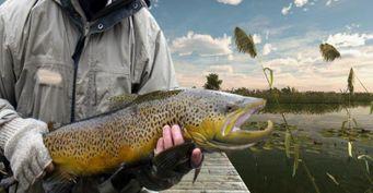 Симуляторы – простой способ познакомить новичка с рыболовством
