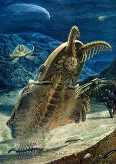 Палеонтологи нашли мозг самого первого хищника на Земле