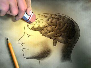 Американские учёные научились стирать память