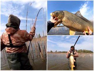 Оказывается большие сазаны любят камыши. Источник изображения YouTube-канал Tra-la-la fishing