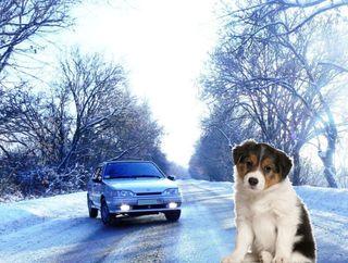 Маленький щенок обнаружен под капотом ВАЗ-2114. Коллаж Pokatim