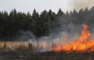 Ученые: Лесные пожары тесно связаны с глобальным потеплением