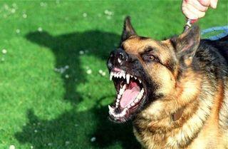 В Краснодарском крае мужчина убил ребёнка, пытаясь застрелить собаку