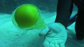 Ученые  выяснили, что будет происходить с разбитым яйцом под водой