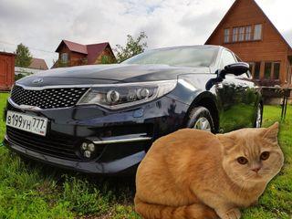 Открой капот— спаси кота. Изображение: «Покатим»