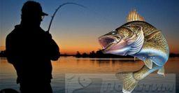 Рыболовный календарь: Лучший день августа для ночной рыбалки нащуку