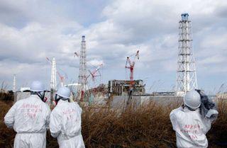 Ученые: в районе Фукусимы у животных и растений произошли генные мутации