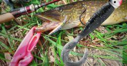 Ловля на джиг: 4 основные ошибки новичка назвал рыбак
