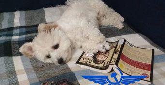 Собаку бросили в Шанхае по вине «Аэрофлота»
