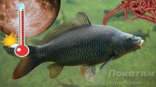 Рыбалка на сазана. Автор изображения «Покатим Ру» Нина Беляева.