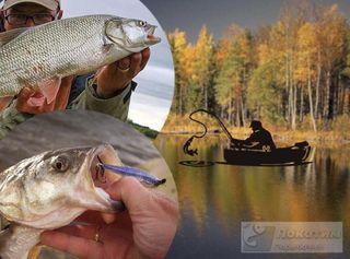Знание секретов рыбалки осенью избавит от ошибок и раскроет способ, как ловить рыбу жерех без проблем. Изображение Елена Лановая