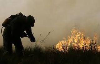 В Беларуси из-за возгорания травы погибли 3 человека