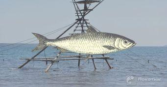 Ошибки заядлых рыбаков: Так уже неловят— законом запрещено