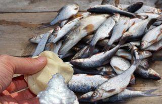 Плотная насадка— залог удачной рыбалки // Изображение: Анастасия Васильева, pokatim.ru
