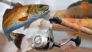 Рыбалка на судака осенью. Автор изображения «Покатим Ру» Нина Беляева.