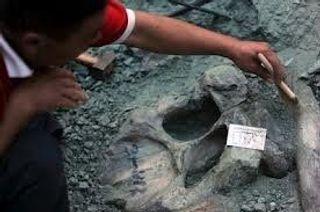 В Аргентине найден скелет самого крупного динозавра